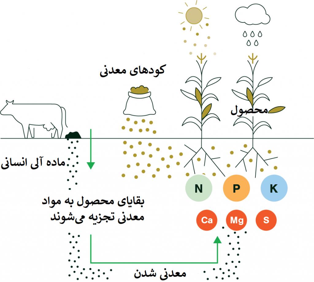 مراحل تولید کودهای آلی