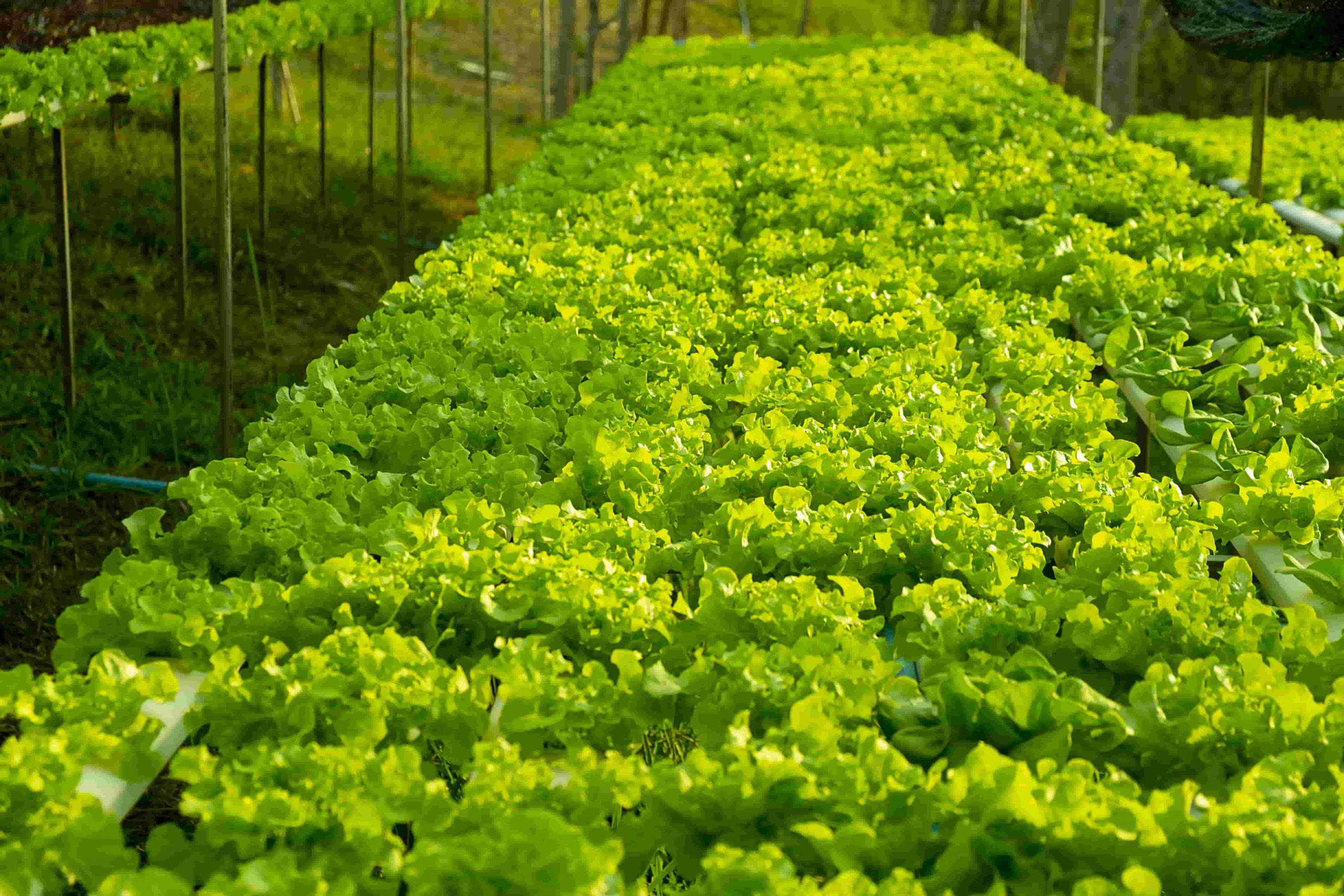 استفاده از کود مونو پتاسیم فسفات جهت بهبود رشد گیاهان